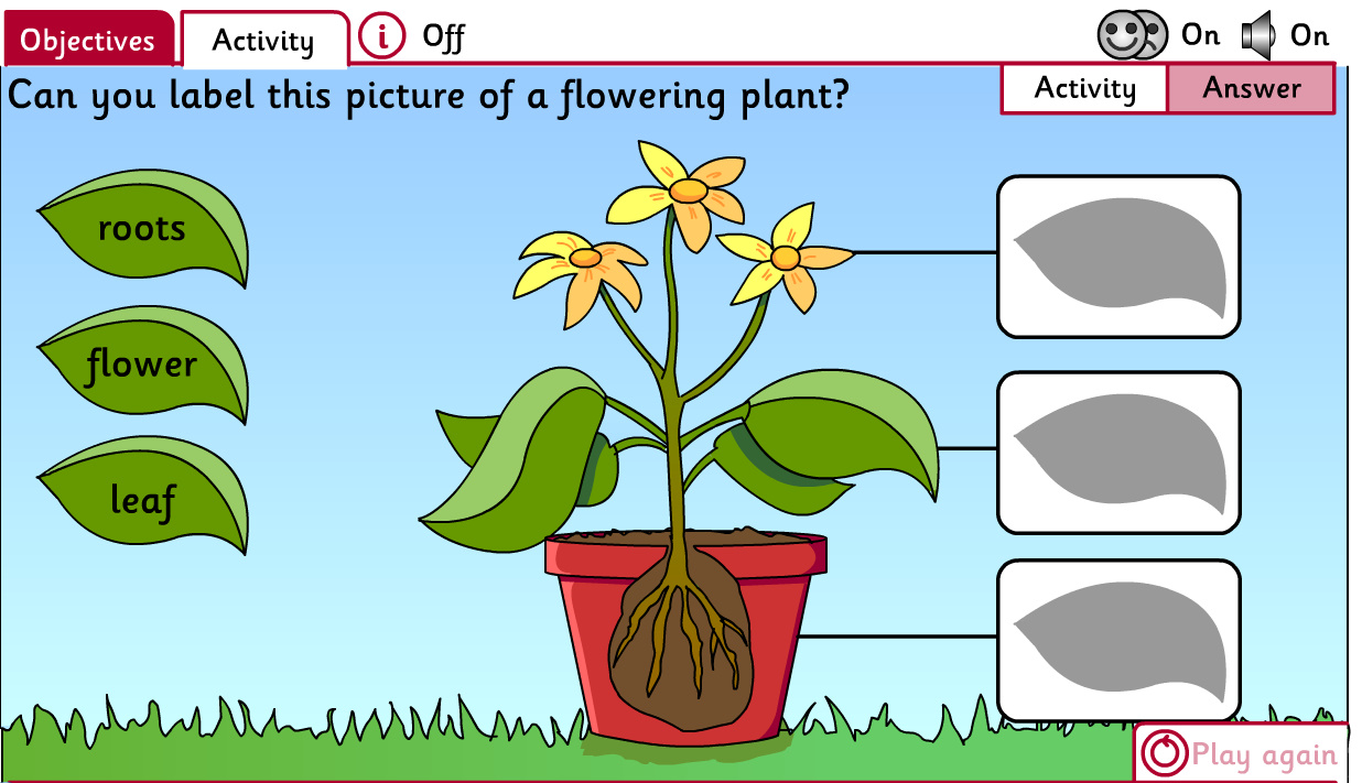 worksheet What Plants Need To Grow Worksheet Ks1 how plants grow interactive white board missmernagh com i will also use this worksheet